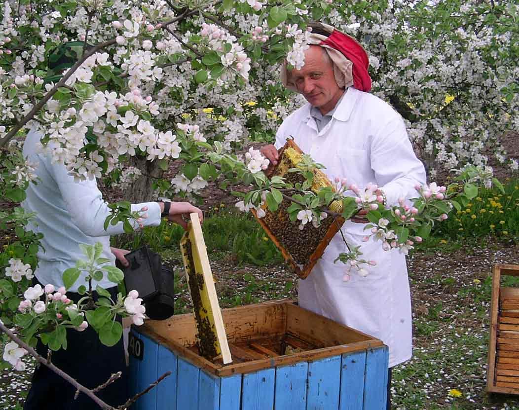 Уход за пчёлами в мае